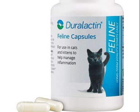 Pros and Cons of Duralactin Pet Medicine