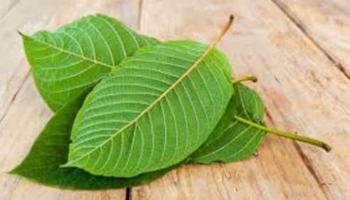 Easy Storage Tips for Kratom To Maintain Its Quality