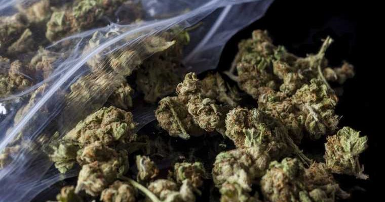 What Are the Different Types of Marijuana Strains That Exist Today